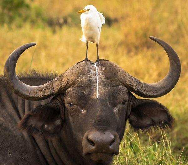 16 Animales Salvajes Graciosos 14