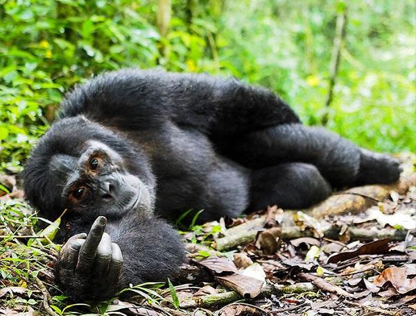 16 Animales Salvajes Graciosos 6
