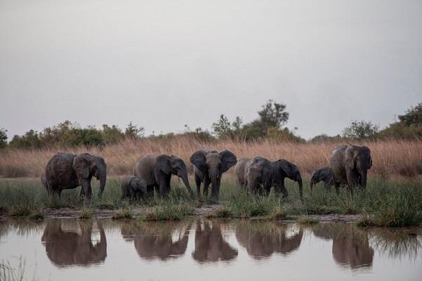 32 Cría Elefantes 1