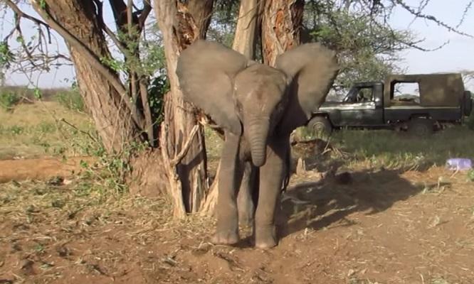 32 Cría Elefantes 10