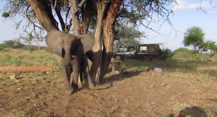 32 Cría Elefantes 11