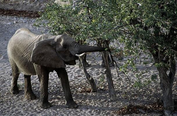 32 Cría Elefantes 12