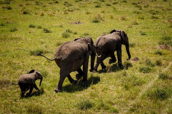 32 Cría Elefantes 13