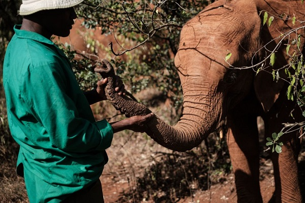 32 Cría Elefantes 14