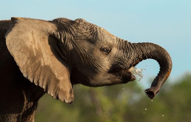 32 Cría Elefantes 16