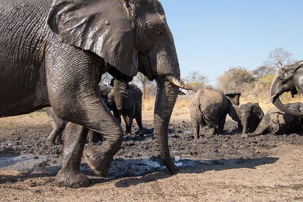 32 Cría Elefantes 19