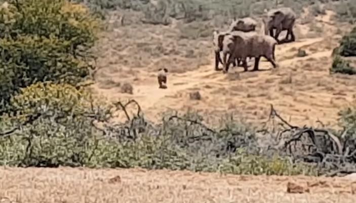 32 Cría Elefantes 20