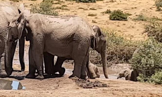 32 Cría Elefantes 3