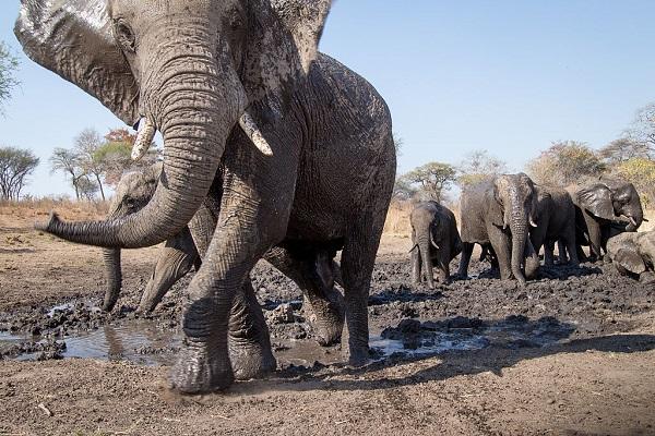 32 Cría Elefantes 4
