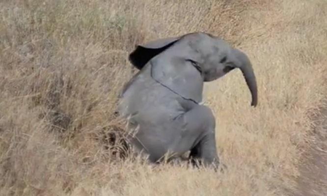 32 Cría Elefantes 5