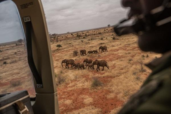 32 Cría Elefantes 6