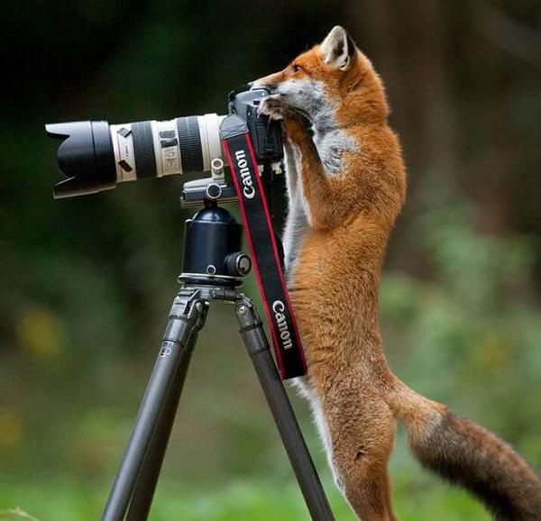 21 Renov Animales Fotos 22