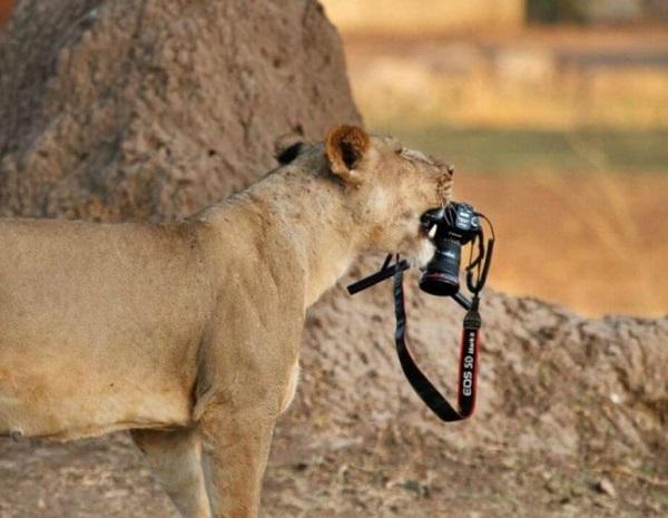 21 Renov Animales Fotos 24