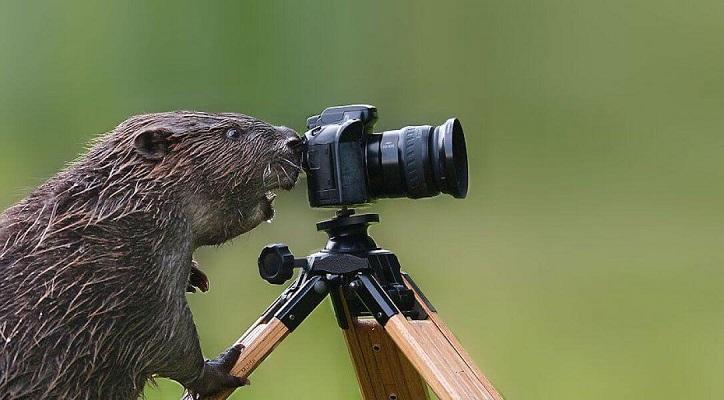 21 Renov Animales Fotos 26