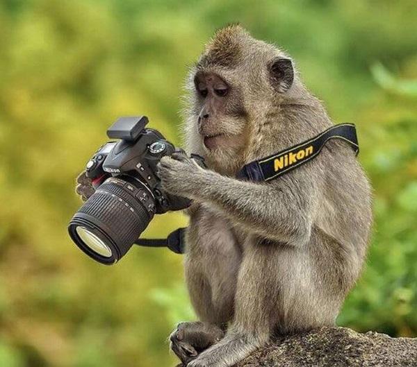 21 Renov Animales Fotos 28