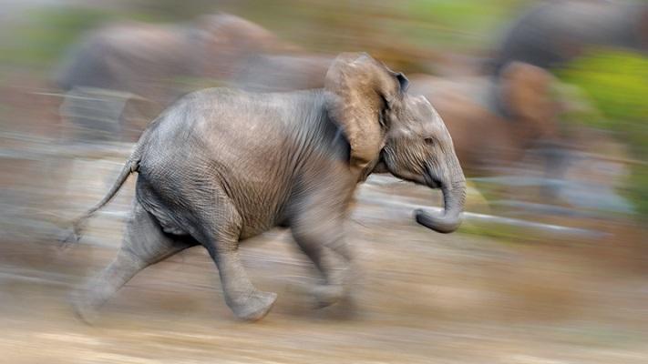 21 Renov Animales Fotos 38