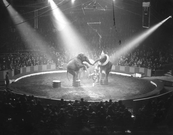 6 Circos 6
