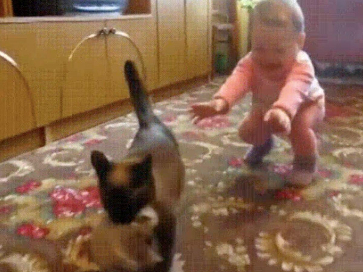 cat takes kitten away from toddler