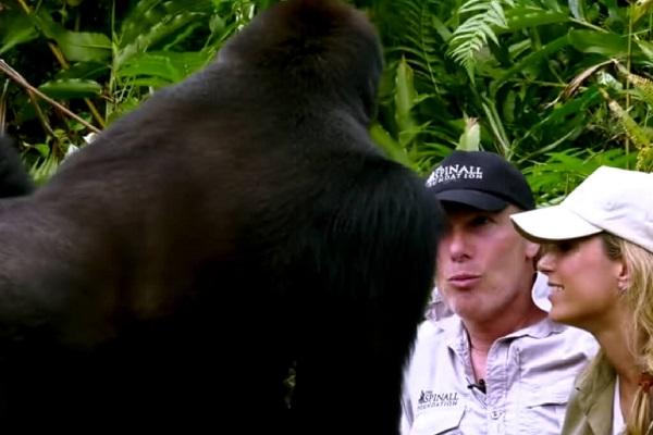 25 Gorilas Mujer 13