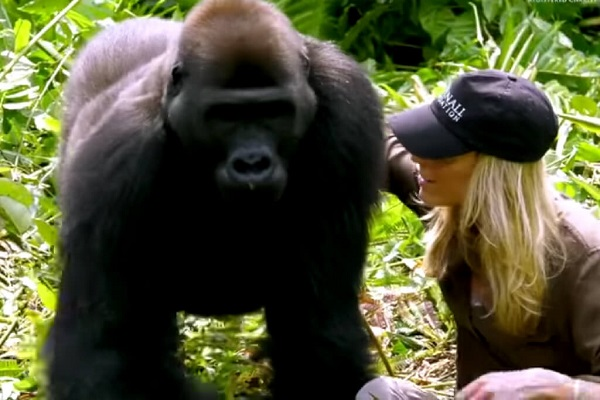 25 Gorilas Mujer 15
