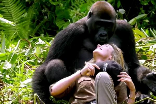 25 Gorilas Mujer 18