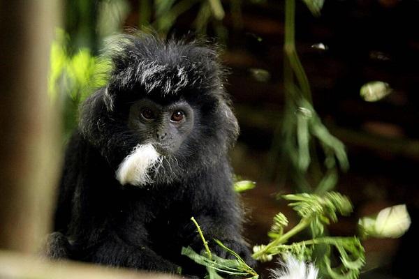 25 Gorilas Mujer 20