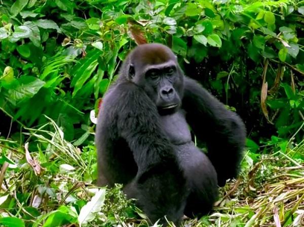 25 Gorilas Mujer 8
