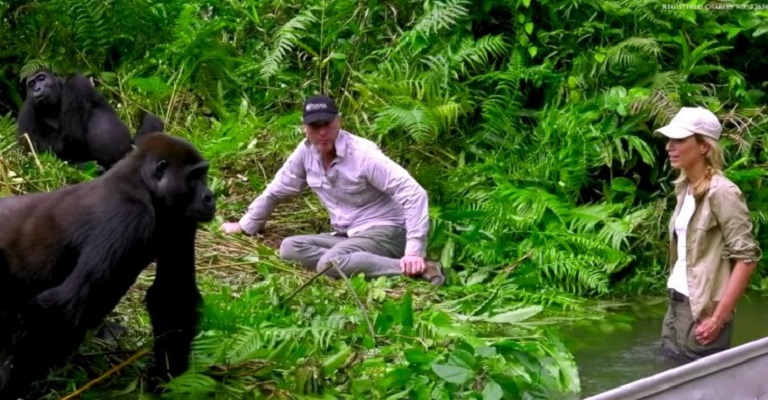 25 Gorilas Mujer 9
