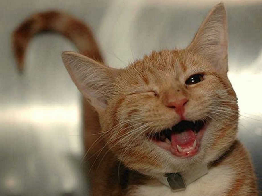 A very happy ginger cat that's winking_ Gender_ unisex