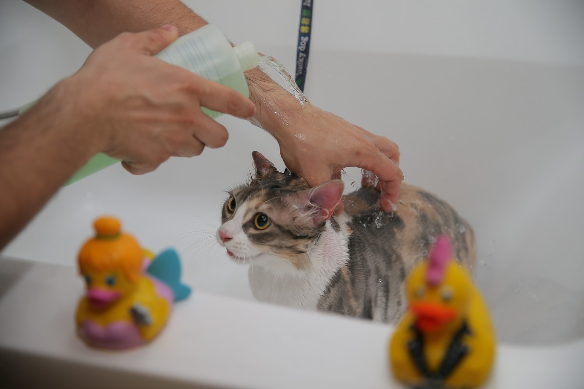 cat named Zilli getting bathed in turkey