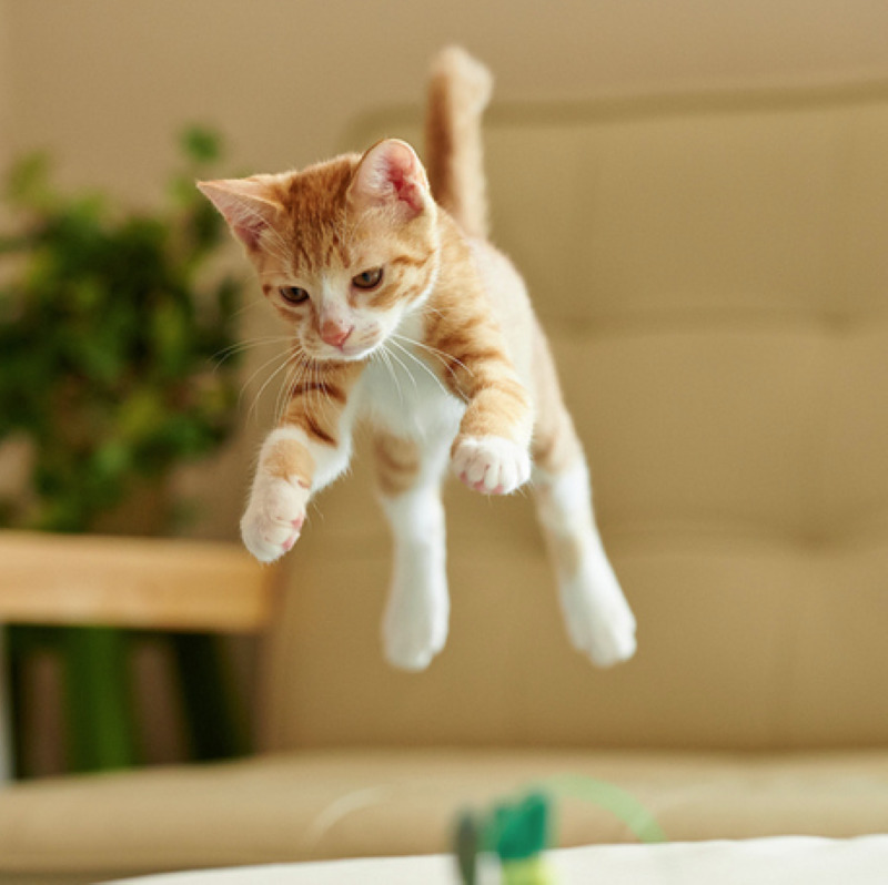 Sprinting Around The House Is A Way To Release Energy