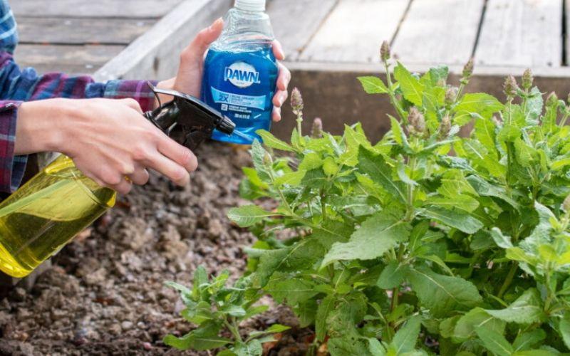 dish soap plant hack spraying dawn