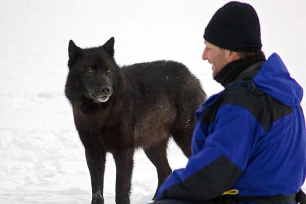 07 Lobo Comunidad Alaska 12