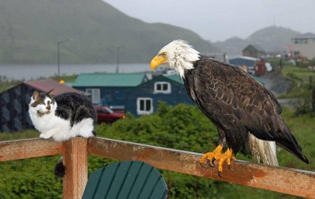 08 Renov Lobo Comunidad Alaska 28