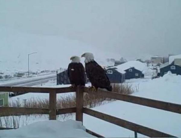 08 Renov Lobo Comunidad Alaska 29