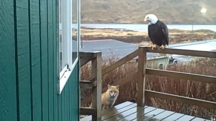 08 Renov Lobo Comunidad Alaska 30