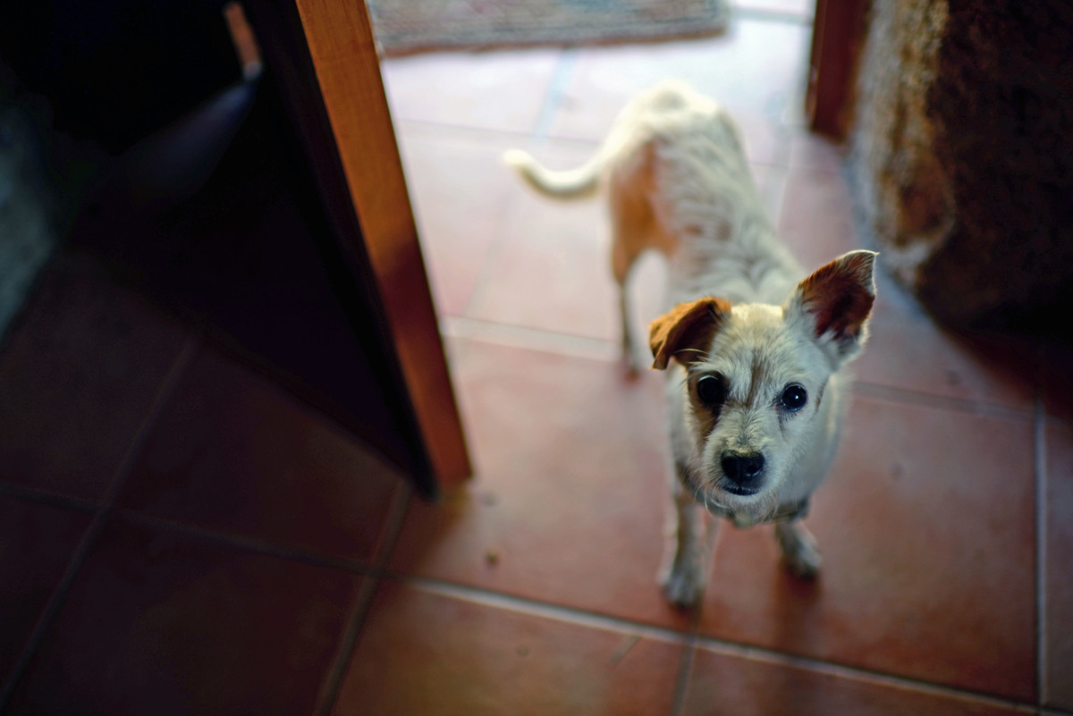 Small white dog waits in an open door.