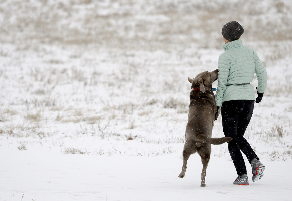 A dog is happy to go for a jog with his owner in Roger's Grove Monday morning.