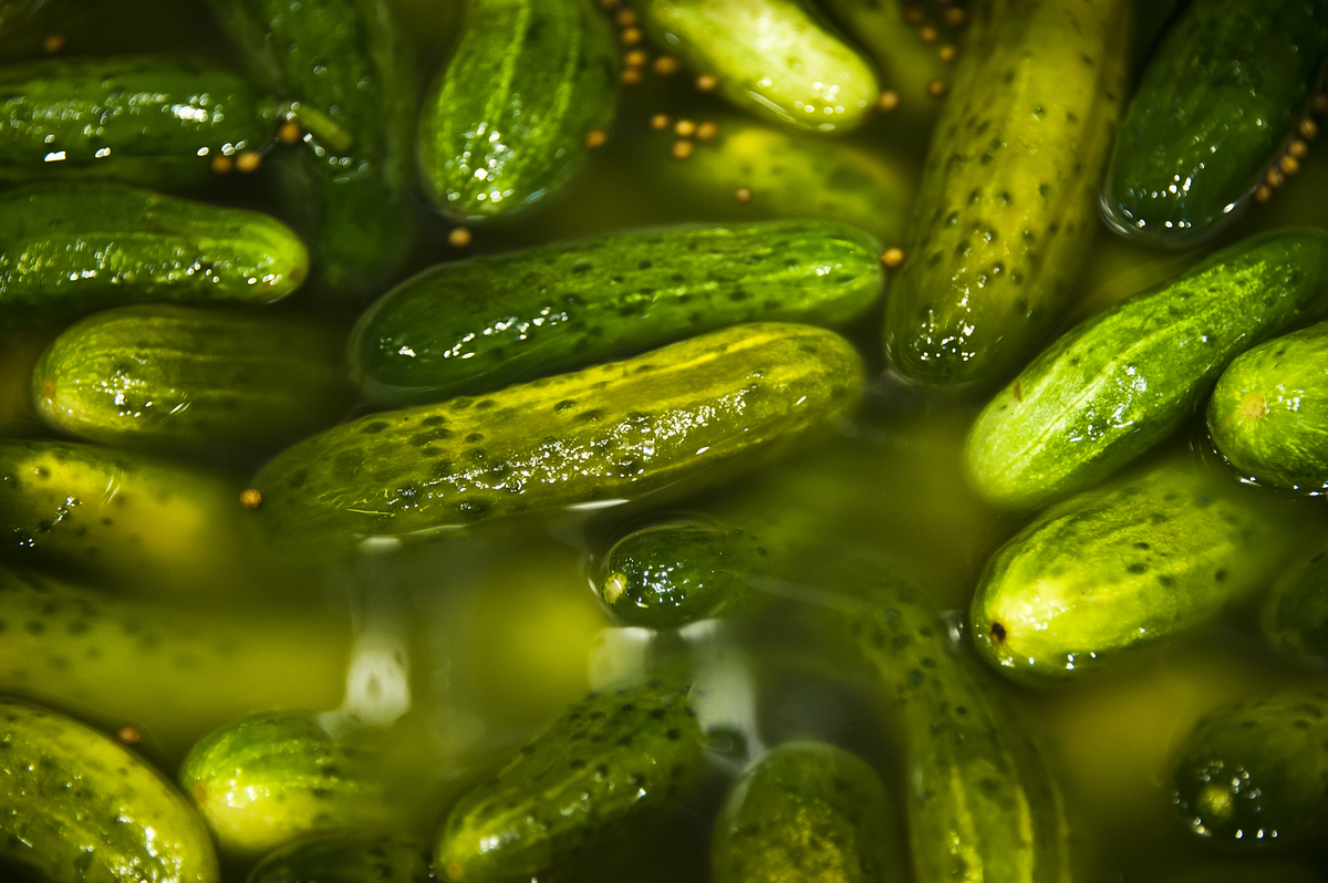 Pickles soak in a barrel.