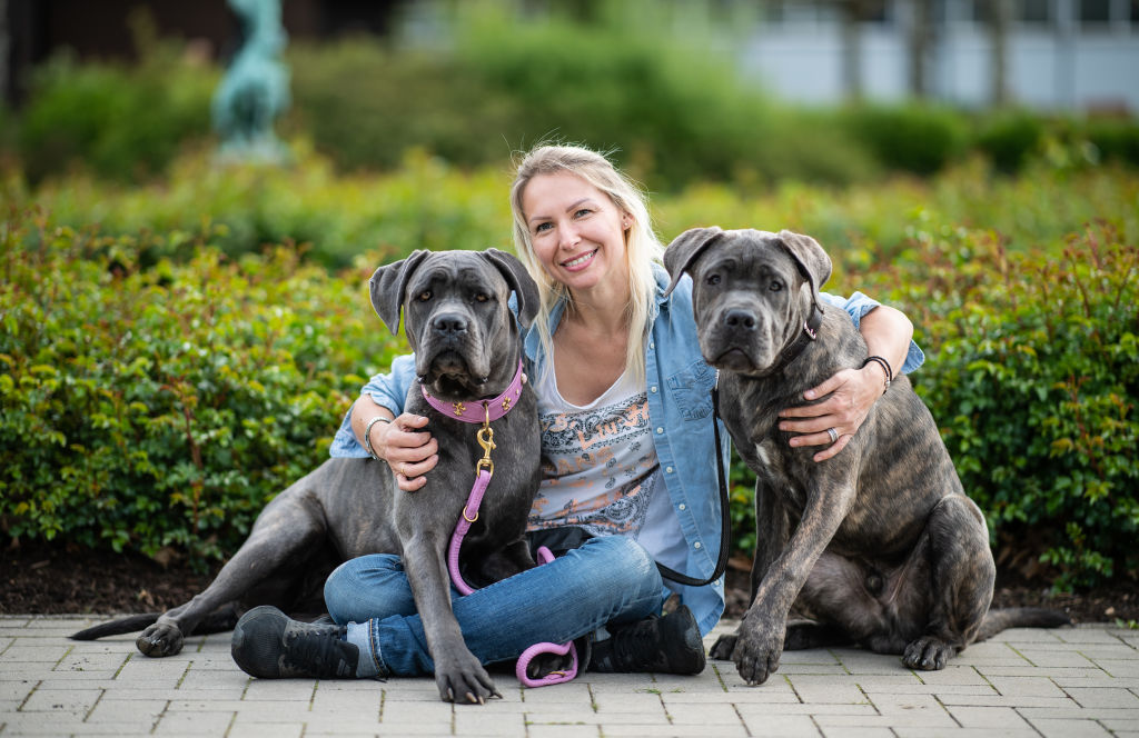 A woman sits on the ground and puts her arms around her two cane corsos.