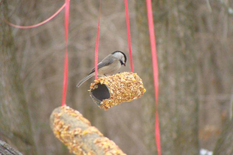A bird stands on a bird feeder made from a toilet paper roll.