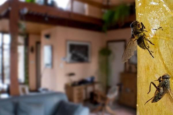 16 Remedios Caseros Contra Pestes 18