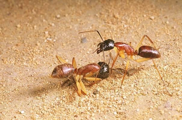 16 Remedios Caseros Contra Pestes 3