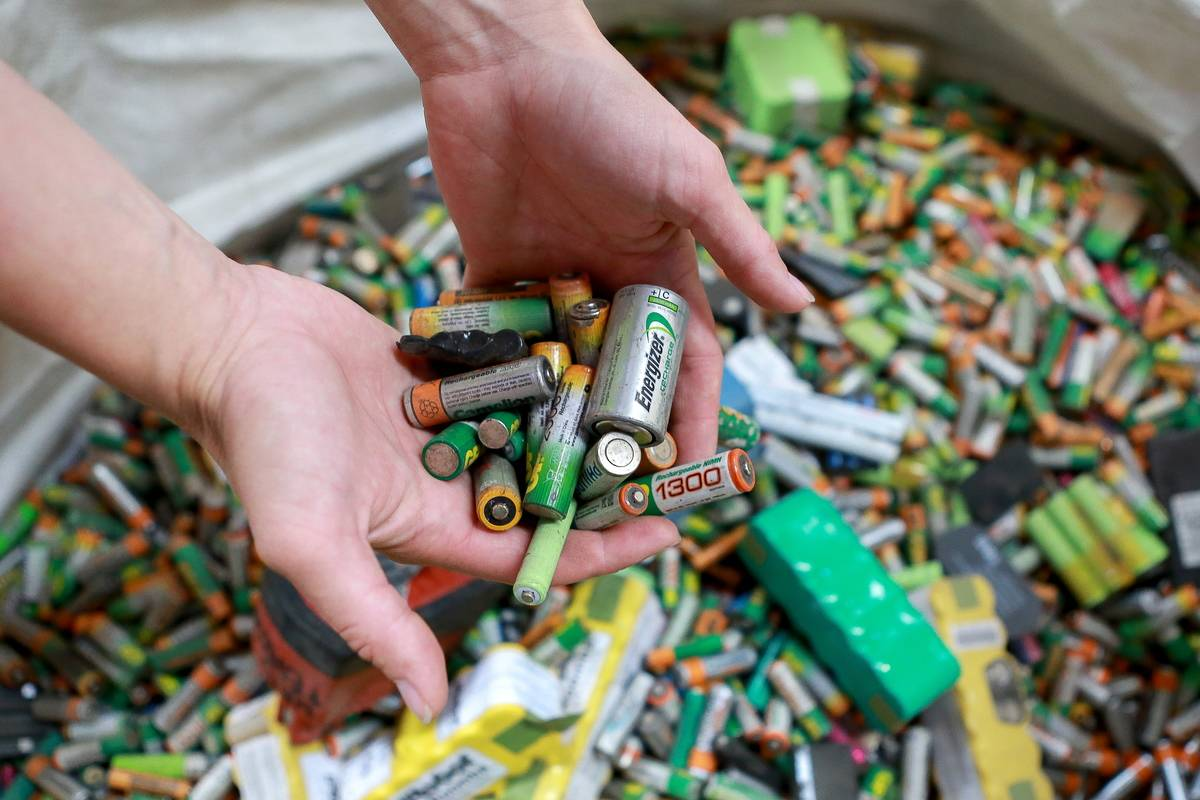 An employee holds recycled batteries in a recycling plant.
