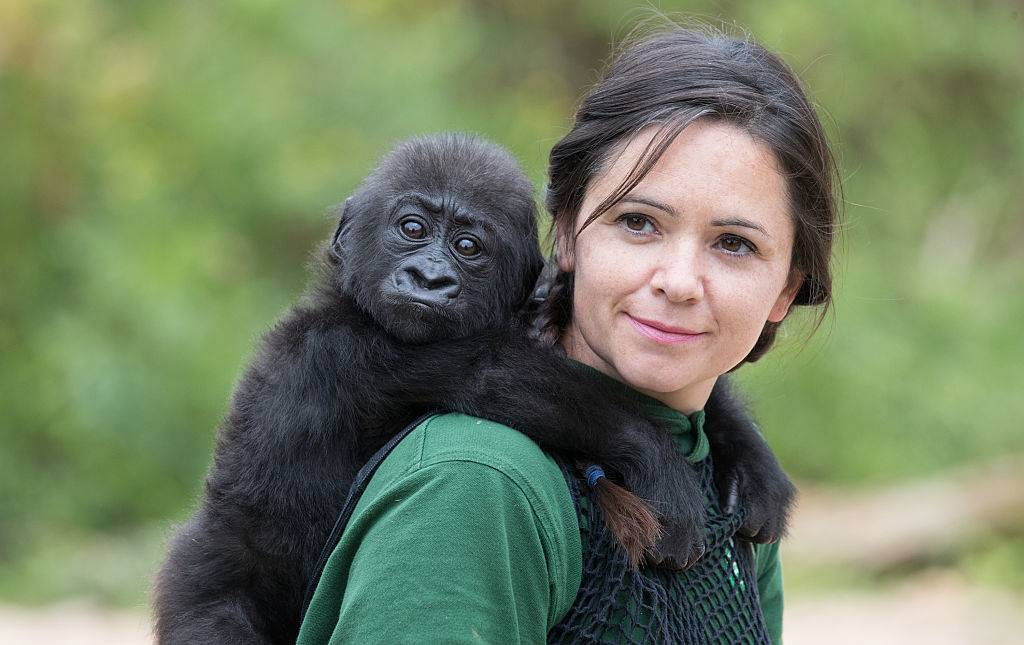 a woman holding a baby gorilla on her back