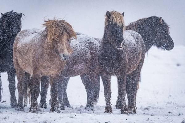 9 Islandia Maravillosa 13
