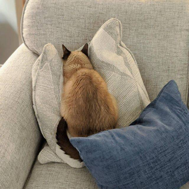 cat with face in pillow