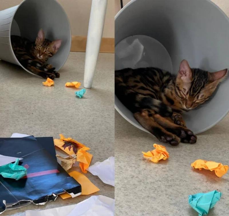 cat in trash bin with all the trash lying around it outside