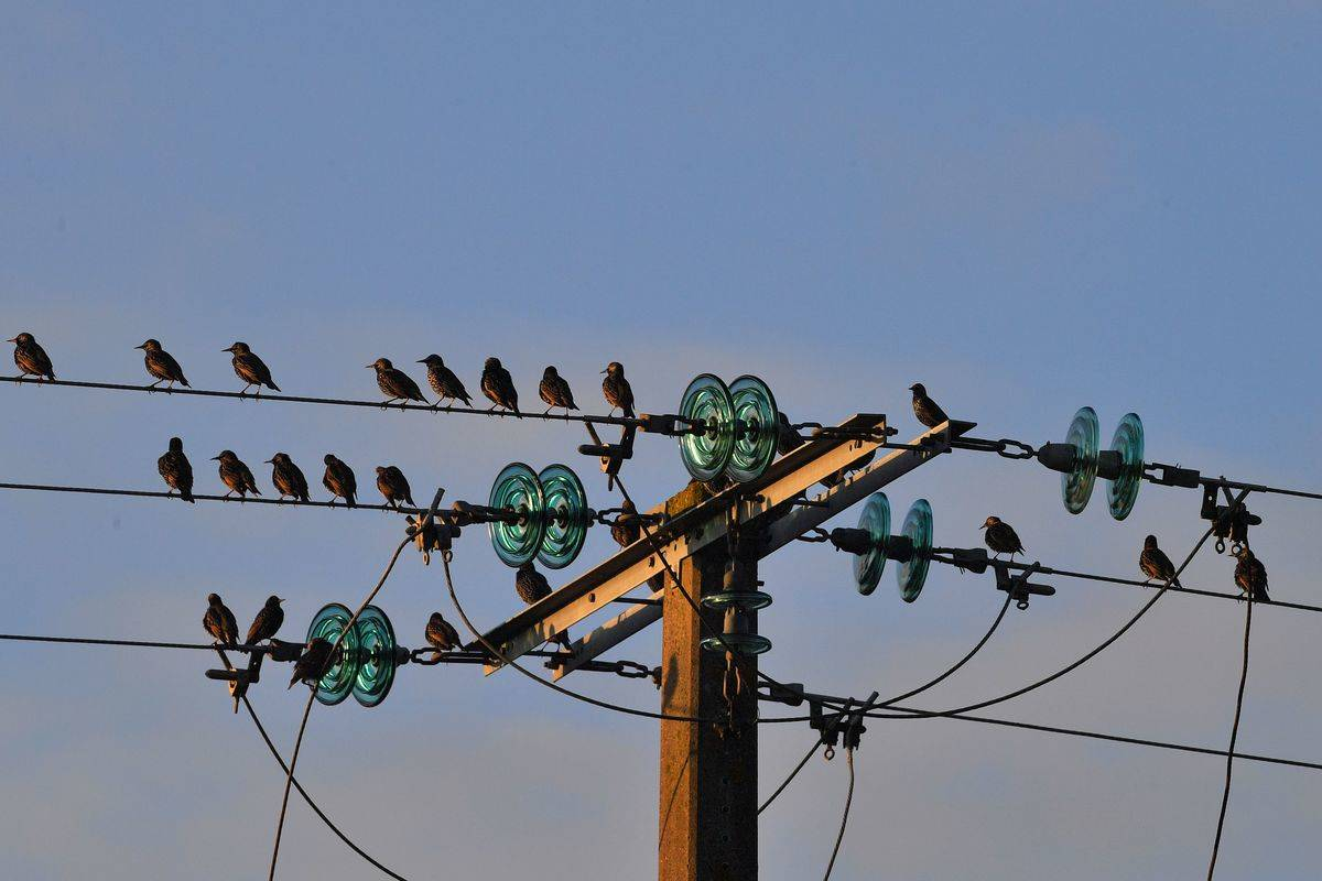 Insulators Help Live Wires Stay On Track