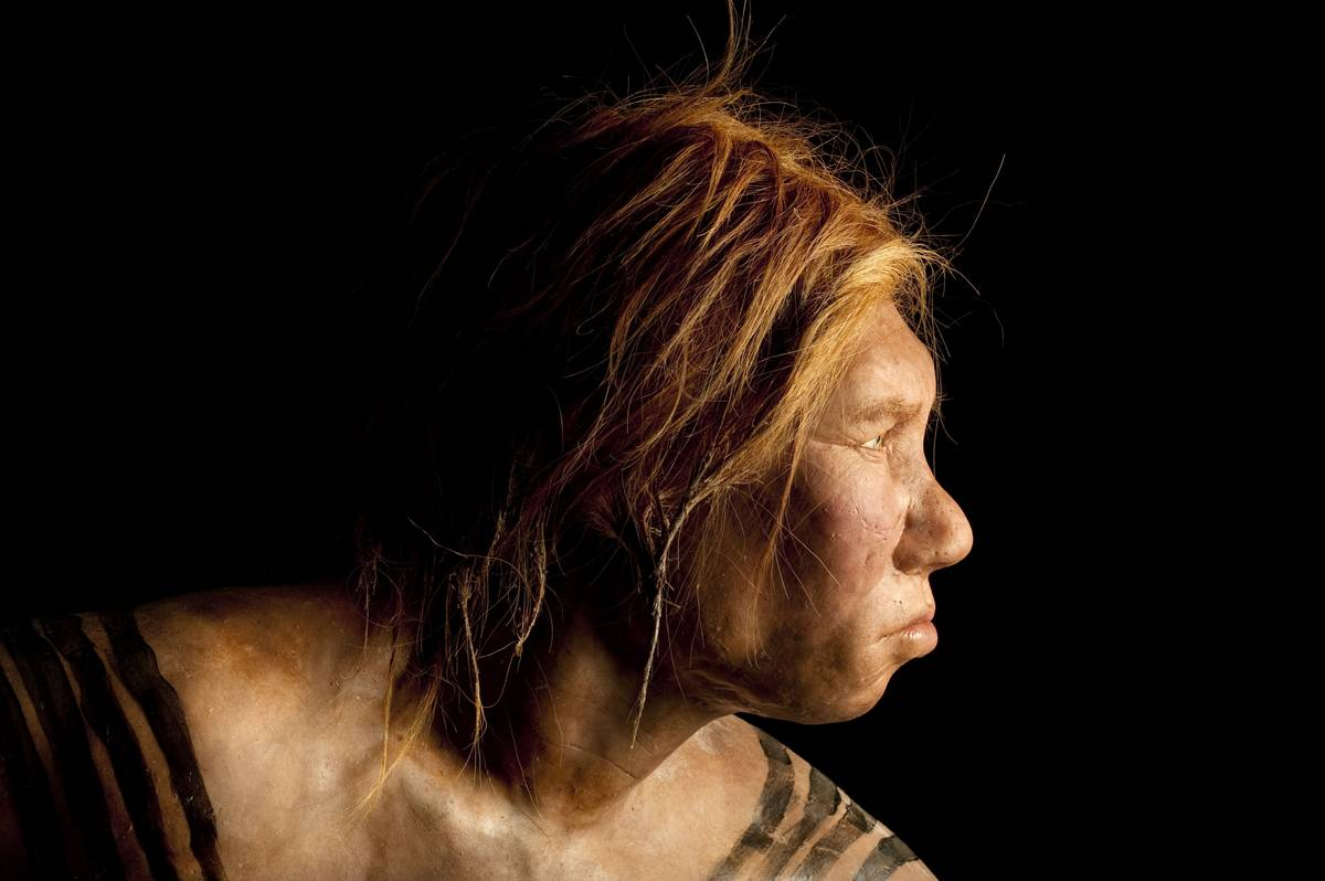 An ancient Neanderthal woman model was created by Dutch artists.